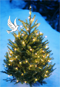 Radiant Peace Tree Lighting @ Schaghticoke Town Hall | Melrose | New York | United States