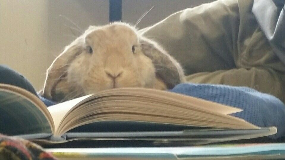 Come Read to Bunny! @ Valley Falls Free Library